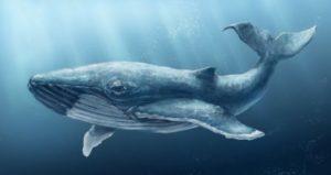 Синий кит, важная информация, Полина Сухова